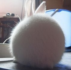 Now, imagine a spherical bunny
