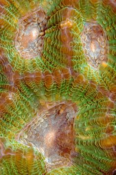 """""""Scream"""" : This coral detail captured our eye due to the resemblance to a screaming face"""