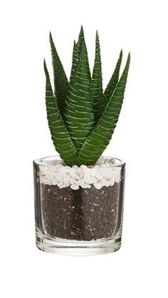 Image Result For Sainsburys Artificial Succulents 0 Completed