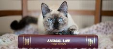 Evcil Hayvan Besleme Yönetmeliği – Mikroçip – Pet Pasaport