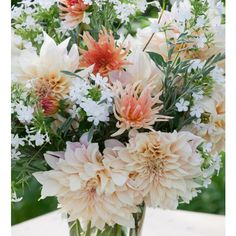 I have just purchased The Queen's 90th Birthday Dahlia Collection from Sarah Raven - https://www.sarahraven.com/flowers/bulbs/dahlias/queens_90th_birthday_dahlia_collection.htm