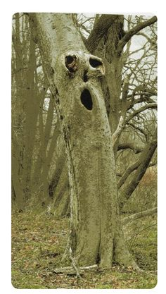 Calling all tree people! Weird Trees, Spooky Trees, Photo Post Mortem, Tree Faces, Tree People, Unique Trees, Tree Carving, Old Trees, Tree Sculpture