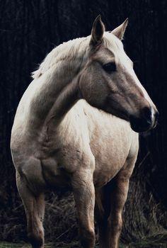 Horse   by Matt Lineker
