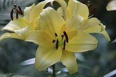 Flowers, Nature, Botanical