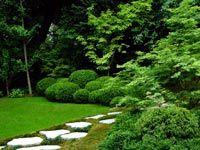 maple-tree-border