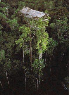 Uma casa de árvore no meio da selva...
