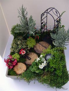 Click through for a do it yourself Fairy Garden Design. This one is called Into The Woods! It inclues a cigar plant lavendar boxwood myrtle primrose baby tears fine goldleaf stonework marjoram variegated variety wood steps and more!
