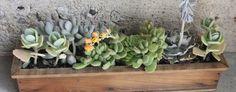 Modern Succulents   Modern Succulent Arrangements