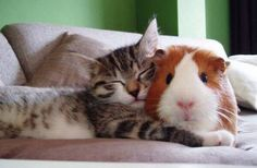 This Pin was discovered by wuvely. Discover (and save) your own Pins on Pinterest. | See more about Pillows and Cat.
