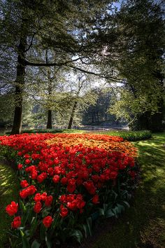 Field with red tulips, Keukenhof Gardens, Lisse, Netherlands Beautiful World, Beautiful Images, Beautiful Gardens, Beautiful Flowers, Gardens Of The World, Language Of Flowers, Red Tulips, Wonderful Places, Mother Nature