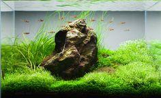 top-200-iaplc-international-aquatic mountains aquarium tank