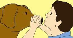 Les premiers secours pour chiens: Peu de gens savent ça et pourtant c'est primordial!