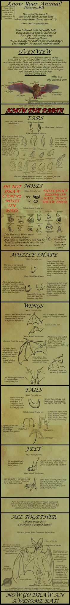 How to Draw Correct Bat Parts on Anthros by shorty-antics-27.deviantart.com on @deviantART