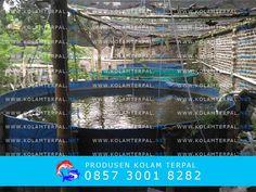 3 Tiga; kolam terpal bulat , cocok untuk memulai usaha bisnis ternak ikan lele #kolamterpalbulat #ternaklele