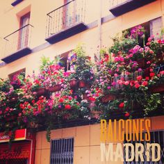 Balcones en Madrid. Little gardens
