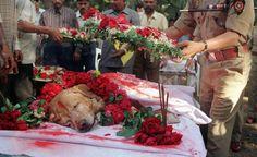 """"""" Velório do cão Zanjeer, que encontrou mais de 3.329 kg do explosivo RDX, 600 detonadores, 249 granadas de mão e 6.406 cartuchos de munição, salvando milhares de vidas em Mumbai durante explosões em série em 1993. Ele foi enterrado com todas as honras em 2000"""""""