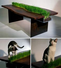 DesignerEmily Wettsteinmade this gorgeous dining table using a slab of reclaimed walnut and she included a planter down the center with cat grass for her handsome kitty, Mr. Baby Dennis. Lucky cat!