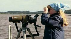 Luonto herää kevääseen   Opettajalle   Oppiminen   yle.fi Telescope, Animals, Animales, Animaux, Animal, Animais