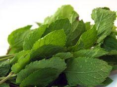 Magen Darm Grippe? Hausmittel gegen Magen Darm Grippe helfen gegen Übelkeit, Durchfall und Erbrechen. Hier finden Sie die besten pflanzlichen Mittel!