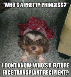 not a pretty princess