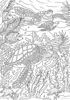 Ocean Life – Turtles coloring page