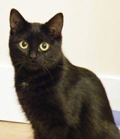 Adopt Valentine On Petfinder Cheval Frison Frison Chat