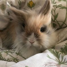 Somebunny Loves You, Cute Bunny, Rabbit, Pets, Bunnies, Pet Stuff, Friends, Animals, Bunny