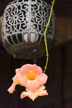 夏!というイメージのお花。