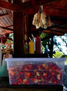 Las fresas con crema que no puede faltar en el Parque Nacional Waraira Repano Caracas, Venezuela