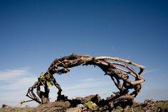 Gewickelte Weinrebe auf Santorini