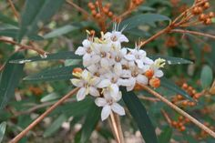 Spring has sprung in the Noosa nat park. Spring Has Sprung, Native Plants, National Parks