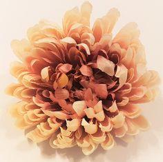 Chryzantéma hlava kvetu Ø 16cm) ružová :: {product_name} Names, Plants, Plant, Planets