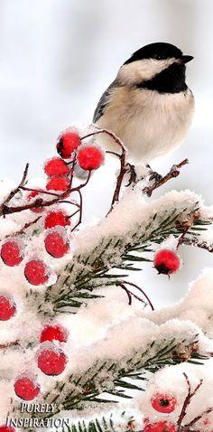 Winter Bird | Purely Inspiration