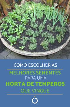 Verdinhas e crescendo Vegetable Garden, Garden Plants, Comment Planter, Urban Farming, Edible Garden, Fruit Trees, Sustainable Living, Plant Decor, Garden Projects