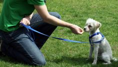 How Improve Your Dog's 'Stay'!