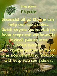 Fairy Plants - Thyme