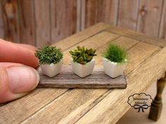 Dollhouse miniature herb plants 1:12 scale in 3 white pots on an aged ...