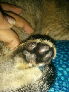 Baby paw Ferret, Bubbles, Baby, Animals, Animales, Animaux, Ferrets, Newborn Babies, Infant