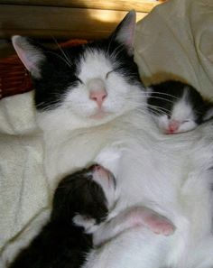 A well deserved rest for this mama cat we thinks !