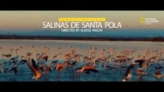 Pink flamingos in Spain, Santa Pola. National Geographic. Directed by Aleksei Pavlov #spain #flamingo #pinkflamingo #nationalgeographic #santapola #salinas #sun #sunset #beauty #silverliontv #alicante #costablanca #valencia #tourism #nature #mar #montereylocals #salinaslocals- posted by Aleksei Pavlov https://www.instagram.com/silverlion.tv - See more of Salinas, CA at http://salinaslocals.com