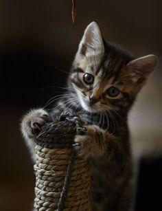 ラブリー-KittyCats、miezekatzen:スクラッチキャッチフィーバー