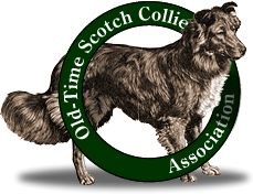 A real farm dog- Old-Time Scotch Collie