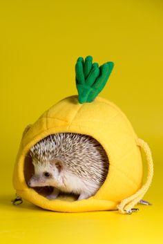 Lupe! Eriza. Hedgehog