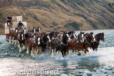 River Crossing, Erewhon Station Clydesdales with wagon load of wool bales, South Island, New Zealand