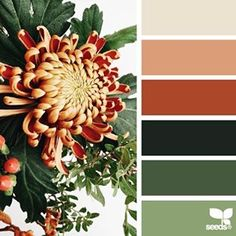 SnapWidget | today's inspiration image for { flora palette } is by @georgiestclair ... thank you, Georgie, for another fresh + inspiring #SeedsColor image share!