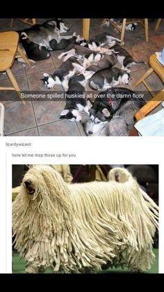 Haha, that's too fun aww that's so frecking cute. Funny Animal Jokes, Funny Animal Pictures, Cute Funny Animals, Animal Memes, Cute Baby Animals, Funny Cute, Funny Dogs, Animals And Pets, Hilarious
