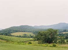 Hues of blue in this mountain view at Pippin Hill Farm & Vineyards in Charlottesville, Va Virginia Wineries, Charlottesville Va, Blue Ridge Mountains, Summer Weddings, Rustic Charm, Mountain View, Wine Country, Lush, Florals