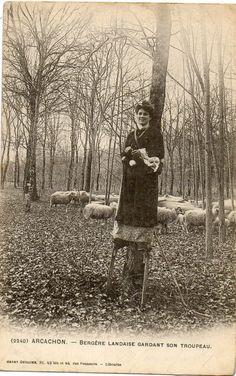ARCACHON (33) bergère Landaise sur ses echasses gardant ses moutons