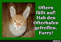 Die 94 Besten Bilder Von Ostern Fanny Pics Funny Images Und Funny