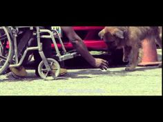 Canis Familiaris - YouTube